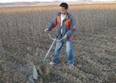 斜挂式多功能收割机收割黄豆